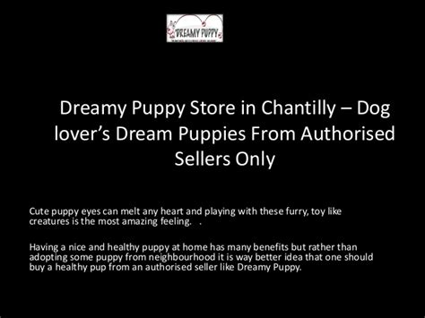 dreamy puppies dreamy puppy store in chantilly puppies from autho