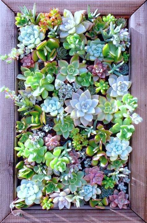 Image Gallery Succulent Wall How To Make A Succulent Wall Garden