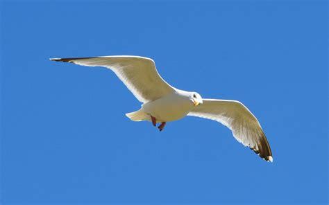how to a bird to retrieve birds bird fly wallpaper 357335