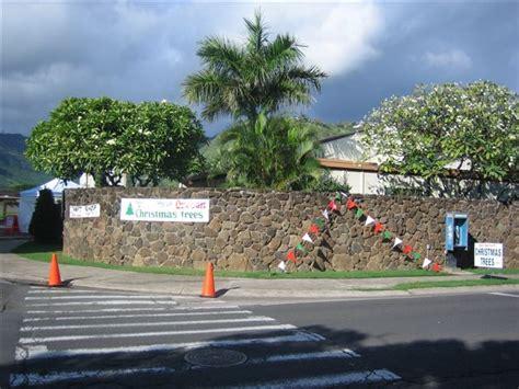 carroll s island christmas tree farm pre cut christmas