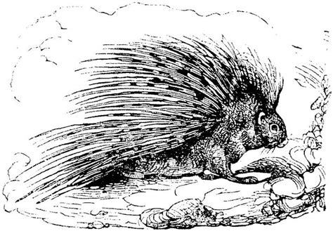 porcupine animal printable coloring sheets coloring pages