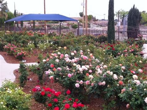 El Paso Municipal Garden by The Garden Picture Of El Paso Municipal Garden