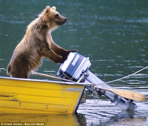 bear boat gone fishin alaskan bear looks like he s about to