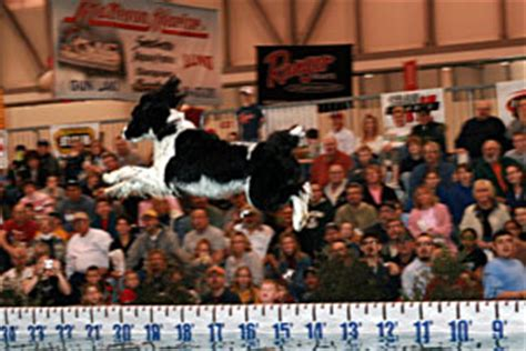 ultimate air dogs family abounds at ultimate sport show march 17 to 20