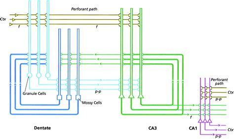 automotive multiplexing systems wiring diagrams wiring