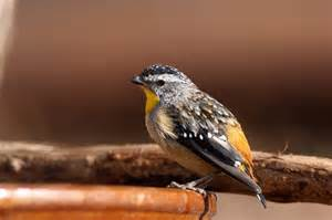 Urban Gardening Supplies - small insect eating birds birds in backyards