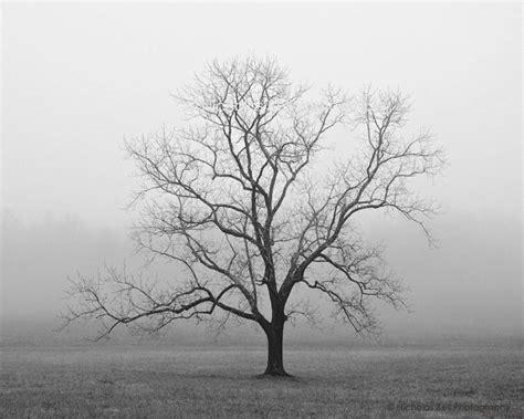 black and white tree photography www pixshark com