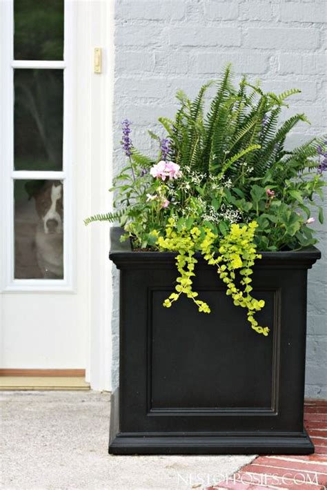 planters for front porch best 25 front door planters ideas on front