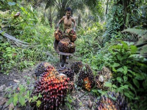 banche svizzere a commercio olio di palma accuse a banche svizzere