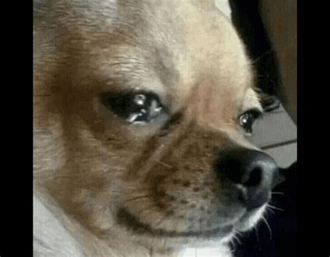 puppy cries meme template search imgflip