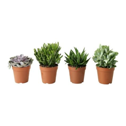 succulent potted plant ikea