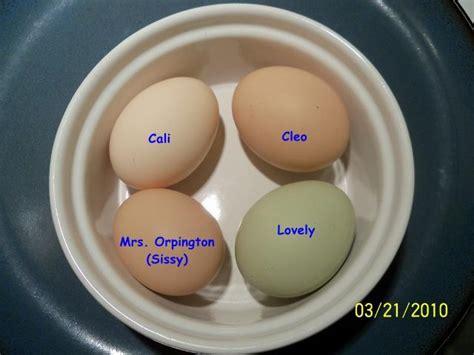 buff orpington egg color orpington egg size