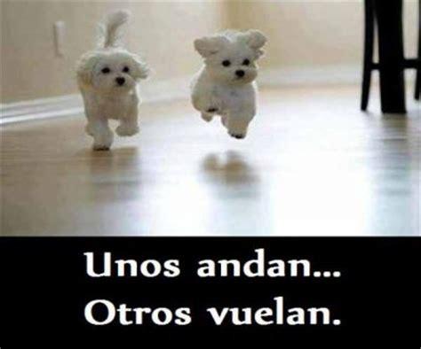 imagenes de animales graciosos para facebook imagenes de perros chistosos con frases imagenes de
