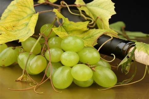 uvas blancas imagenes uvas blancas y una botella de vino 37423