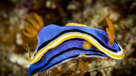 colorful aquarium fish most colourful tropical freshwater fish