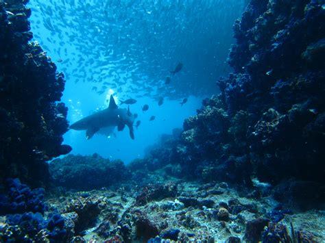 galapagos dive galapagos diving mangrove galapagos lodges all