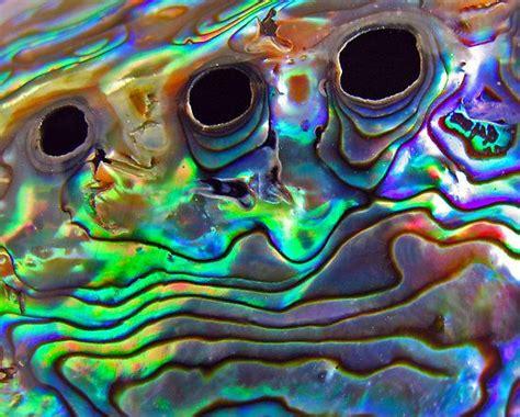 shell badezimmerdekor die besten 25 paua shell ideen auf abalone