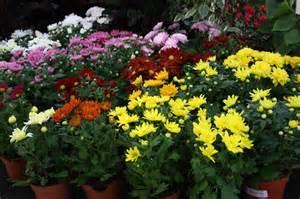 Potting Indoor Plants gallery for gt indoor potted flowers