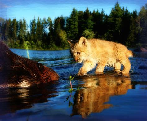 imagenes espectaculares reflexivas fotos espectaculares de paisajes naturales para whatsapp