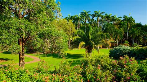 Botanical Gardens Darwin George Brown Darwin Botanic Gardens In Darwin Northern Territory Expedia