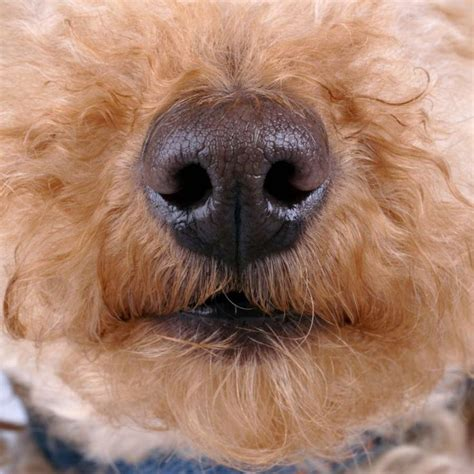 nose work for dogs 1000 images about pets nosework on