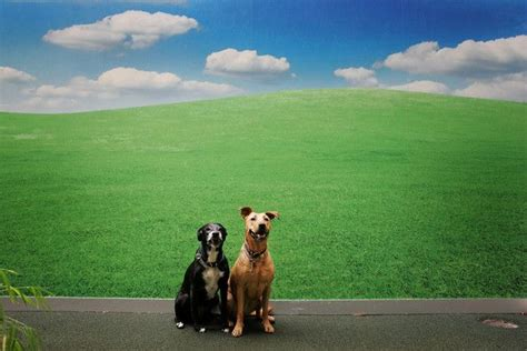 Best Outdoor Careers 17 best images about career change doggy daycare on