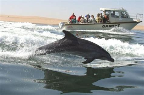 boat cruise swakopmund windhoek places to visit in windhoek namibia