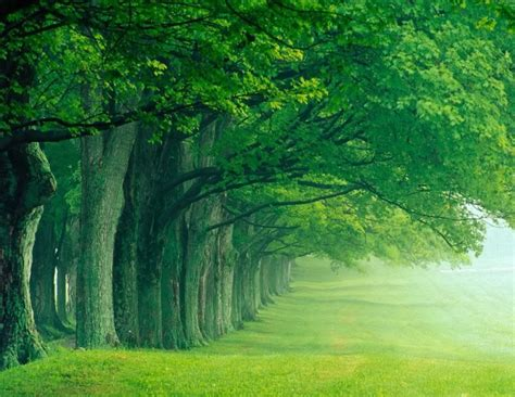 cool trees nature trees line nature photography wallpaper