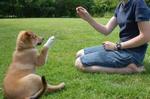 How To Bury A Dog In The Backyard Dog Training Tips How To Train Your Dog Stopping Dog S