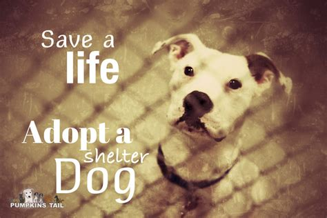 dogs saving lives adopt a save a breeds picture