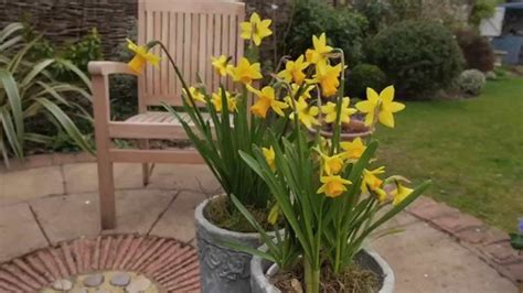 Brighten Up Your Garden by Brighten Up Your Patio With Pot Plants Richard Jackson S