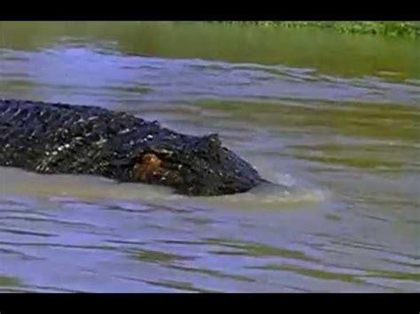 The Crocodile 2 killer crocodile 2 1990 can you spot the crocodile