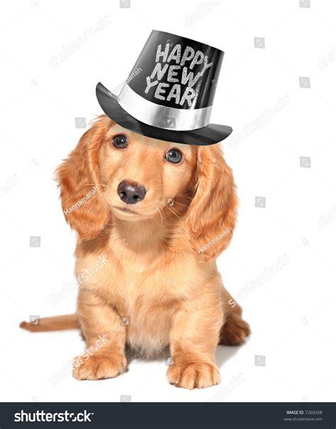 happy new year puppy happy new year s puppy stock photo 7269268