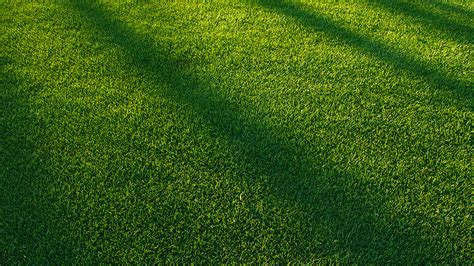 vj lawn grass sunlight green pattern papersco
