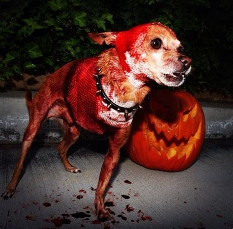 scary puppy 60 creative costumes ideas