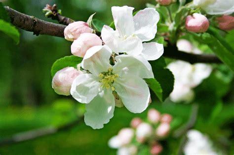 fiori di bach contro fame fiori di bach obiettivo benessere