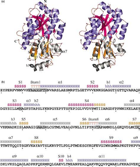 structure  sequence  bordetella pertussis bugd     scientific