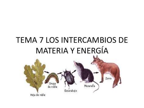 cadenas troficas ecologia tema 7 los intercambios de materia y energ 237 a