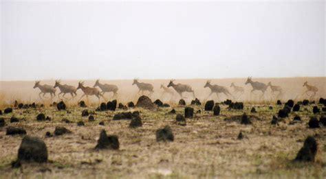 Munda Wanga Environmental Park   Elephant Charge