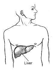 Steroids & Liver Damage Symptoms - Which Are Most Toxic