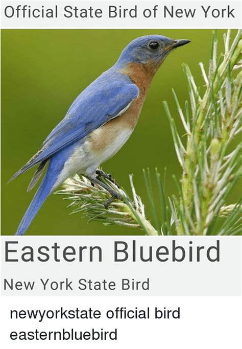 25 best memes about state bird state bird memes