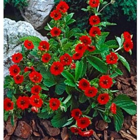 heat tolerant plants 39 best images about high heat drought tolerant flowers