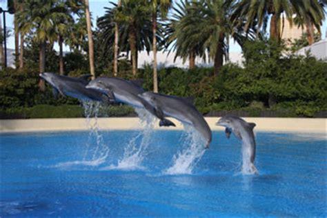 Secret Garden And Dolphin Habitat by Secret Garden And Dolphin Habitat At The Mirage Desktop