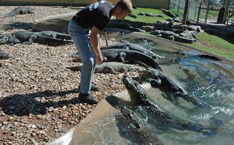 Reptile Garden South Dakota by Animal Show South Dakota Attractions Reptile Gardens