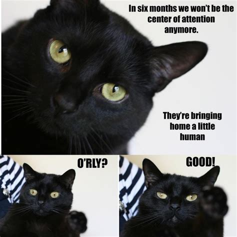 cat meme pregnancy announcement baby stuff pinterest