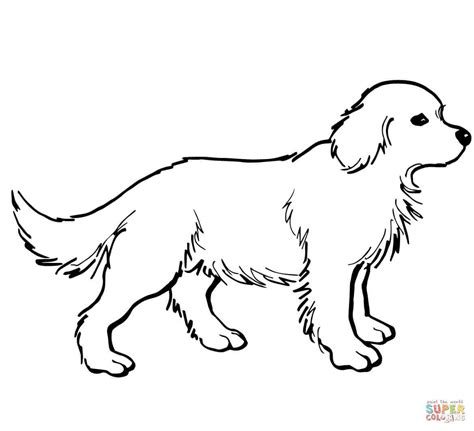 labrador coloring pages labrador retriever coloring page free printable coloring
