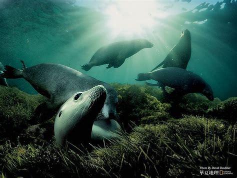 National Geographic Wildlife national geographic animals wildlife national
