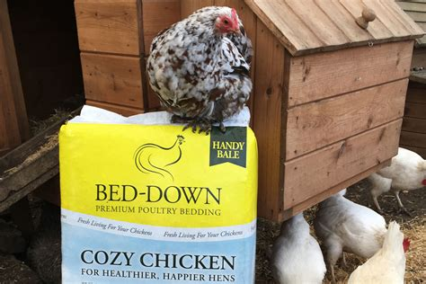 cozy bedding cozy bedding straight from suffolk poultry bedding cozy chicken