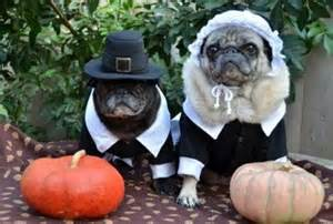 dog thanksgiving costumes the pet matchmaker pets celebrate thanksgiving in
