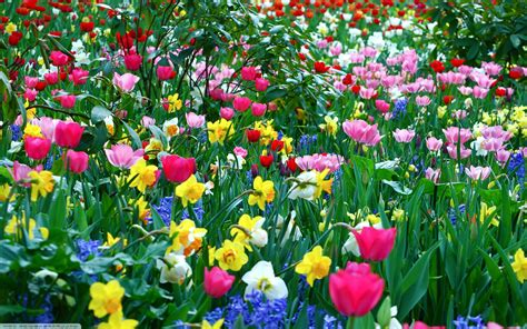 spring florals spring flowers wallpapers